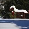20110113-snow-around-town-5