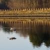 20120318-sudbury-reservoir-wraight-5