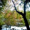 20120930-beals-preserve-fall-2