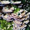20120930-beals-preserve-fall-4