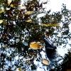 20120930-beals-preserve-fall-5