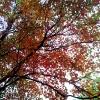 20120930-beals-preserve-fall-6