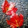 20120930-beals-preserve-fall-7