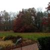 20121029-front-lawn-tree-smukherjee