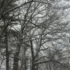 snowglobe_2