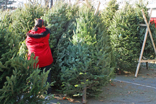 Post image for Christmas trees on sale at the fire station