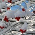 first-snow-10
