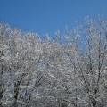 first-snow-11
