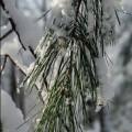 first-snow-4