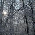first-snow-5
