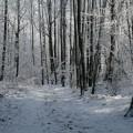 first-snow-6