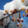 first-snow-9