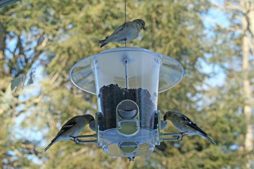 Post image for In my backyard: Birds, birds, birds