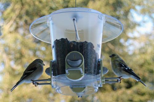 backyard-birds-2