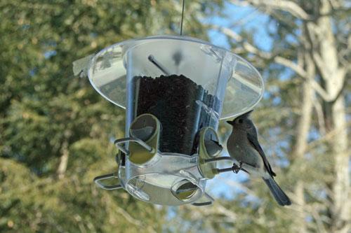 backyard-birds-3