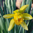 Thumbnail image for Photos: Spring is sprouting in Southborough