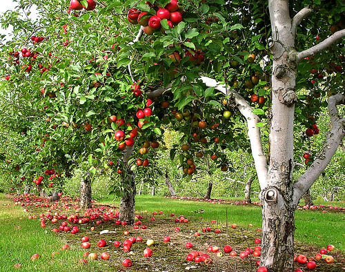 Post image for Your favorite places: Apple picking