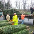 Volunteers unload Christmas trees at the Fire Station (contributed photo)