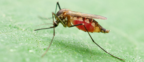 Post image for Early cases of EEE-infected mosquitoes have Southborough officials urging caution
