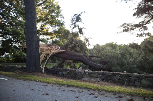 Post image for Southborough police logs (9/17/12 – 9/20/12): Falling trees block multiple roadways