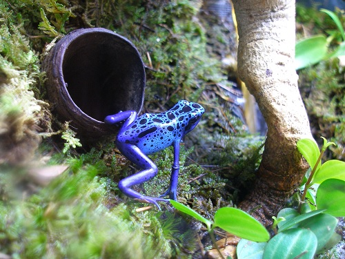 Post image for At the Southborough Library this week (7/29/13-8/2/13): Rainforest animals and PS3 play