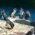 New England Aquarium (Photo by Joao Melo)