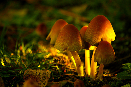 Post image for Explore Southborough's fascinating fungi this Sunday, October 26