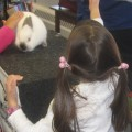 After the 2011 show, kids lined up to pet Snuggles, the magical rabbit