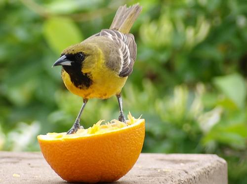 Post image for Kids can make Edible Bird Feeders – January 28