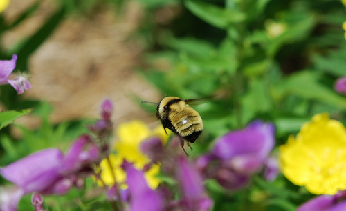Post image for Helping sustain pollinators: Talks, important facts, pending legislation and links