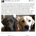 missing_labs_facebook_post
