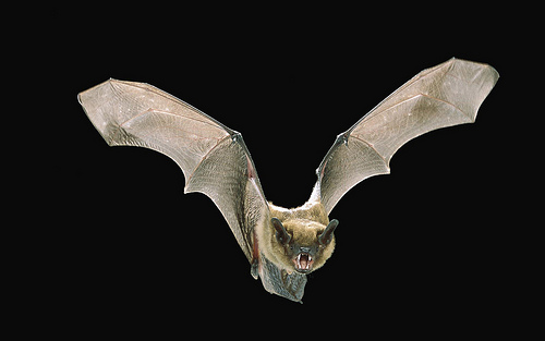 Post image for Bats & other creatures of the night – March 29