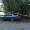 storm damage on White Bagley Road (photo by Chris Wraight)