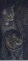 Lost cats (cropped from image posted to Facebook by Kendra Frary)