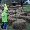 Hay Maze at the Chestnut Hill Farm Festival 2016 (photo by The Trustees of Reservations)