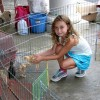 Barnyard animals petting zoo at Rec camp (photo from Southborough Recreation Facebook page)