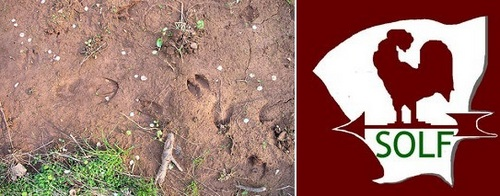 Post image for Wildlife Tracking at Beals Preserve – Saturday