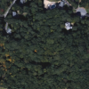 image I found using Google maps online - includes the trees and surrounding roads