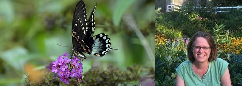 Post image for Butterfly & Hummingbird Gardens w/Ellen Sousa – May 15