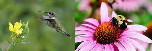 Post image for Supporting Pollinators and SOLF Annual Meeting – May 9th
