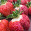 CHF strawberries from this summer (from CHF blog)