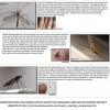 mosquito imposters part 2