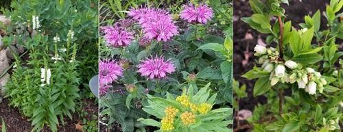 Post image for Garden tour celebrates native plants – Sunday (Updated)