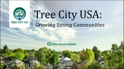 "Post image for Town Meeting: ""Tree City"" Article 28 codifies current policies; no additional costs"