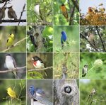 contributed photos of Birds of Breakneck by Dawn Vesey