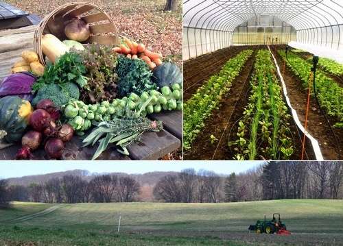 Post image for Chestnut Hill Farms is certified organic (and open year round with Winter CSA options) (Updated)