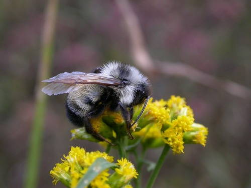 Post image for The People-Plant-Pollinator Connection – Sunday