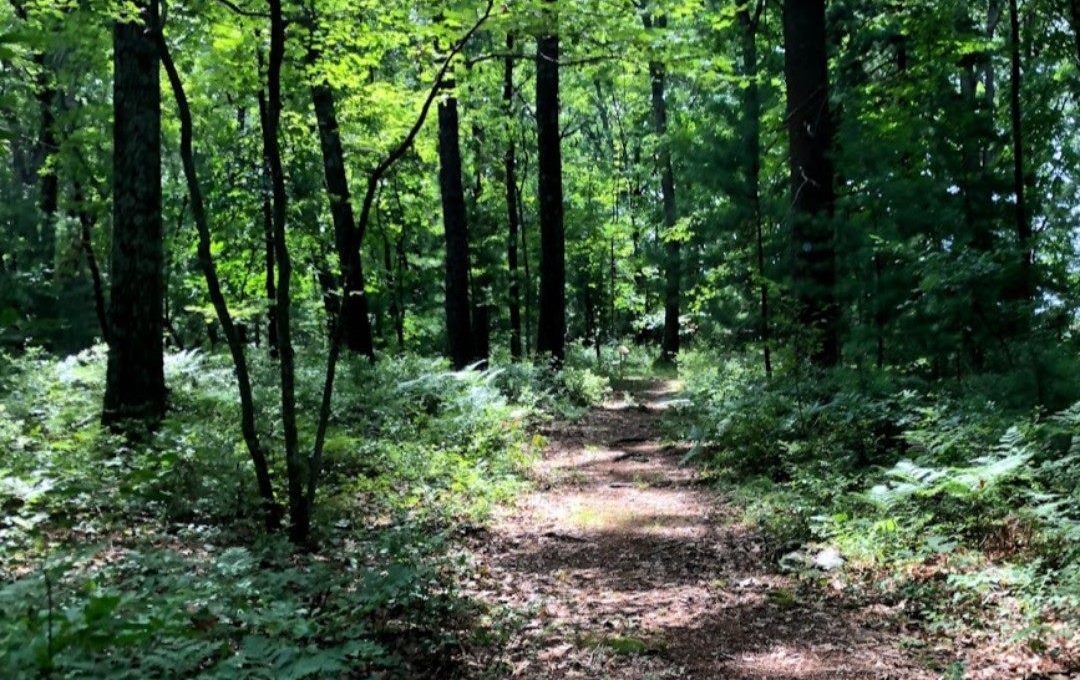 Post image for Town seeking volunteers to help at Chestnut Hill Farm trails