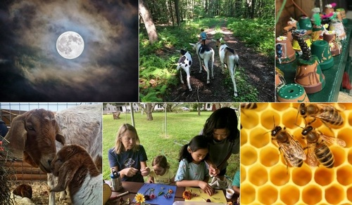 Post image for Chestnut Hill Farms announces summer events (Updated – Again)