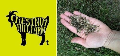Post image for Free Seed Saving Workshop – October 24